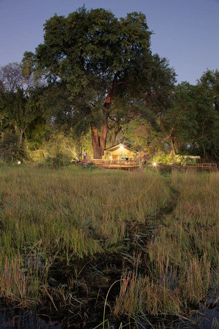 Gunns Camp - Blends in with Natural Surroundsings - Maun, Botswana