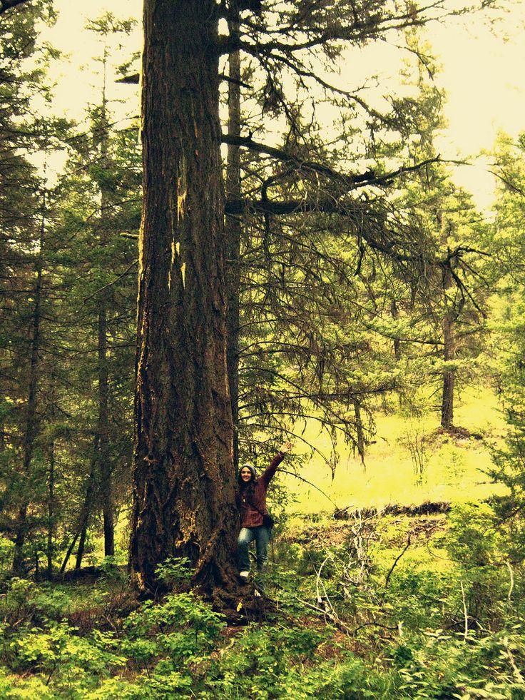 Hike in the pristine wilderness of Interior BC Canada.