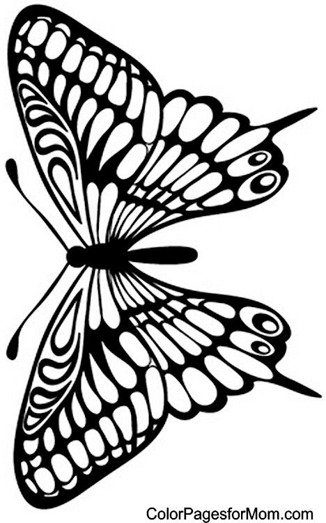 Butterfly Coloring Page 29