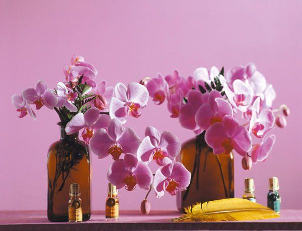 Cómo lucir las #orquídeas