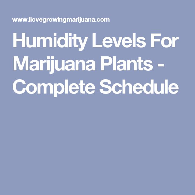Humidity Levels For Marijuana Plants - Complete Schedule