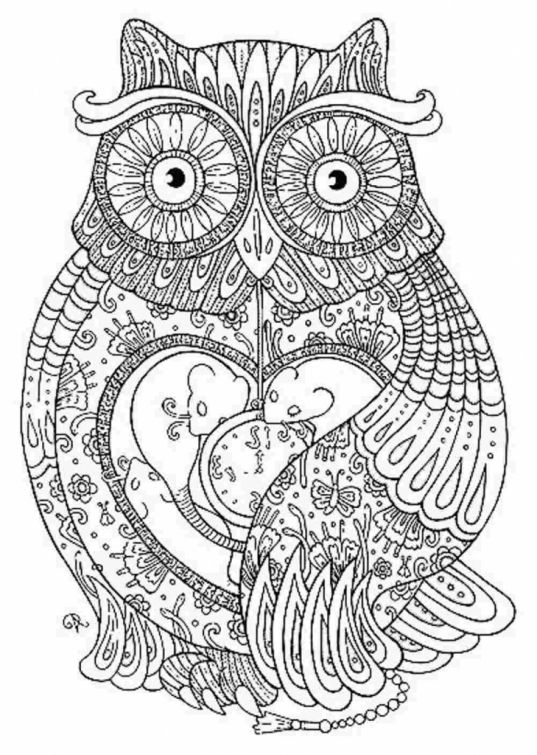 online printable advanced coloring sheet of an owl for grown ups