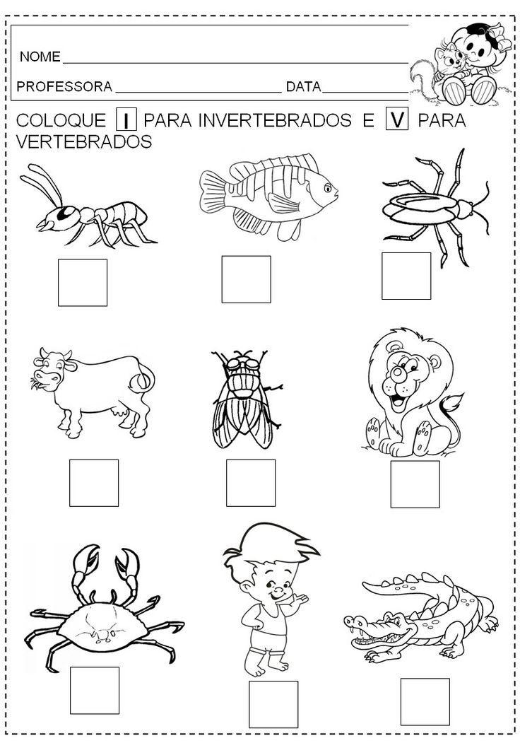 Resultado de imagen para actividades para trabajar animales vertebrados e invertebrados