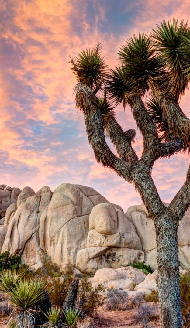 Explore the best National Parks in California with TripHobo Trip Planner.