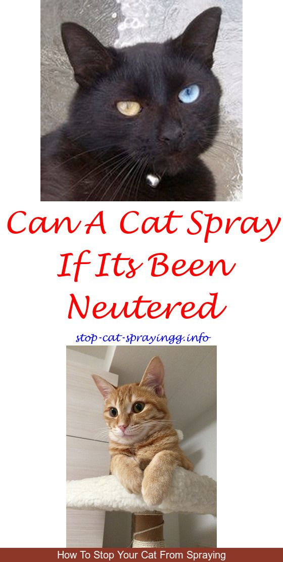 naturvet herbal flea spray for cats reviews flea spray frontline rh pinterest com
