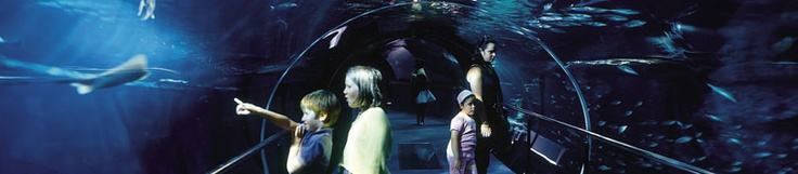 San Sebastian & childrens.  AQUARIUM.  Plunge into the depths of the sea  Almost a century old, but younger than ever, San Sebastian's recently refurbished Aquarium has to be one of Europe's most modern oceanographic museums.