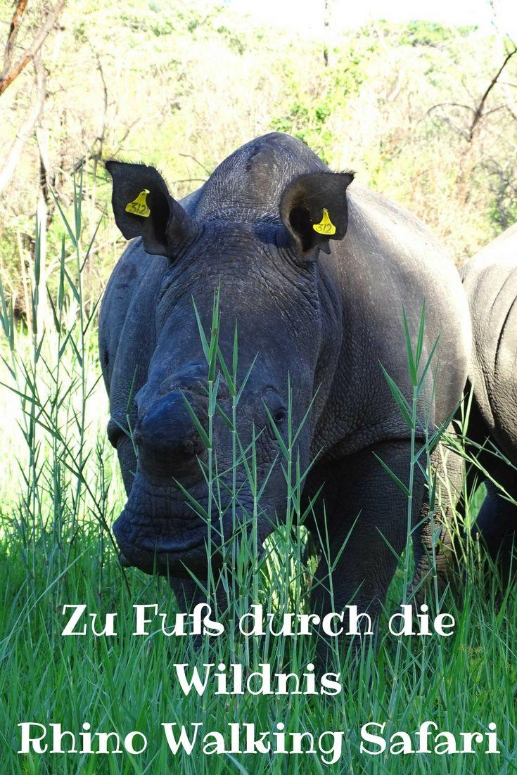 Rhino Walking Safari im Matopo-Nationalpark in Simbabwe.