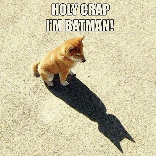Batman dog #batman #dog