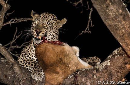 Another truly amazing sighting! Thank you Nikita!