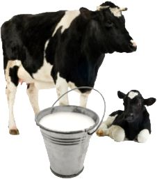 Did you know the average American consumes almost 25 gallons of milk a year? That's 400 glasses! - See more at: http://www.milkunleashed.com/whats-happening/milk-facts.html