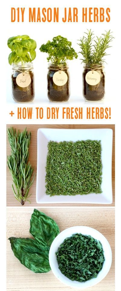 DIY Mason Jar Herb Garden + How to Dry Fresh Herbs! | Tips at TheFrugalGirls.com
