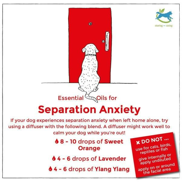 Essential Oils for separation anxiety in dogs :)