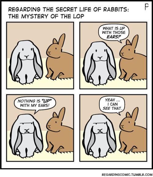 REGARDING THE SECRET LIFE OF RABBITS: The Lop.