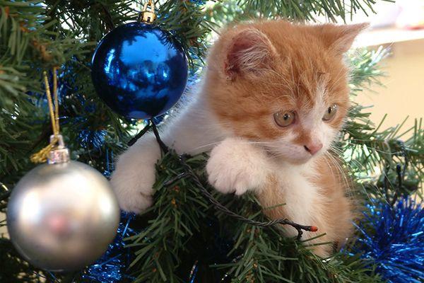Pet Sitting: Πώς να σώσετε 5 από τις 7 ζωές της γάτας σας αυτή ...