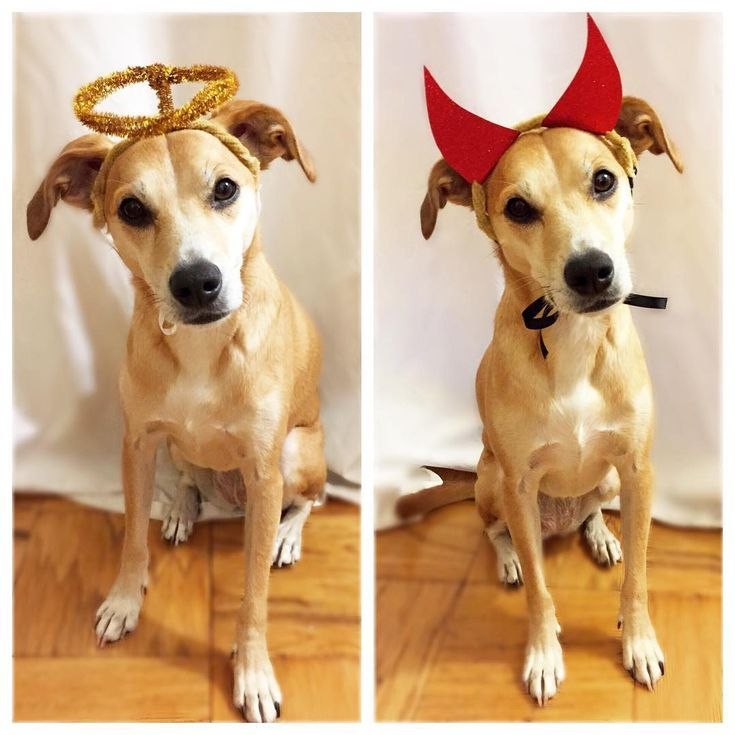 25 Adorable Diy Dog Costumes For Halloween Diy Dog Costumes Dog
