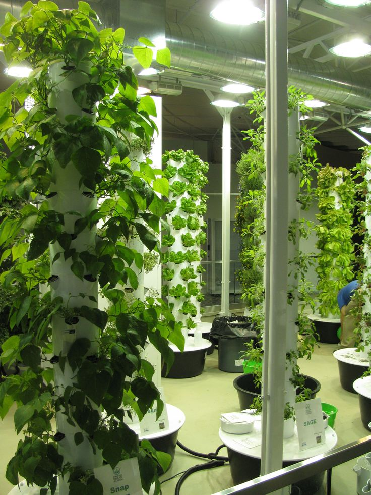 17 Best 1000 images about Growing Herbs with Hydroponics on Pinterest