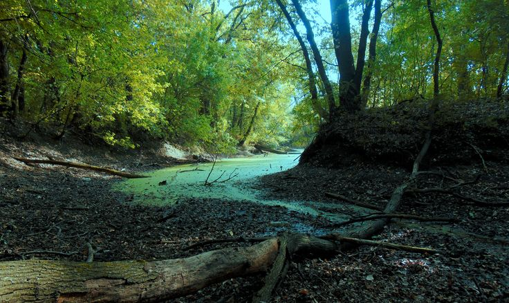 Пересохшее русло реки
