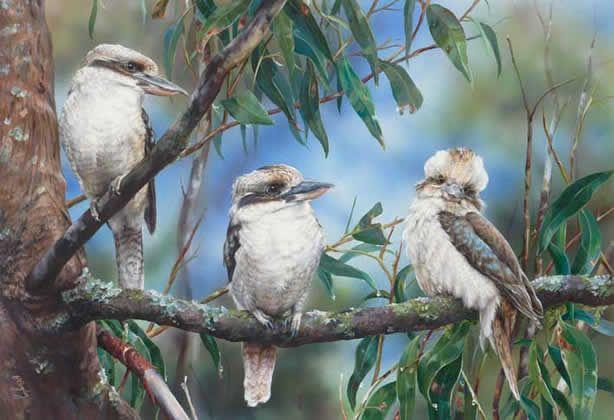 Kookaburras Three 2013