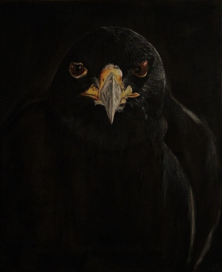 Black hawk. Oil on canvas. 24 x 30 cm.