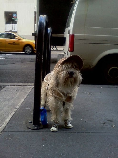 animals doing people things: Hats, Shoes Doggies, Dogs, Dresses, Conver, Jeans, Funny Animal, Chuck Taylors What, Disney Movie
