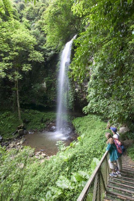 Crystal Shower Falls, Dorrigo NP