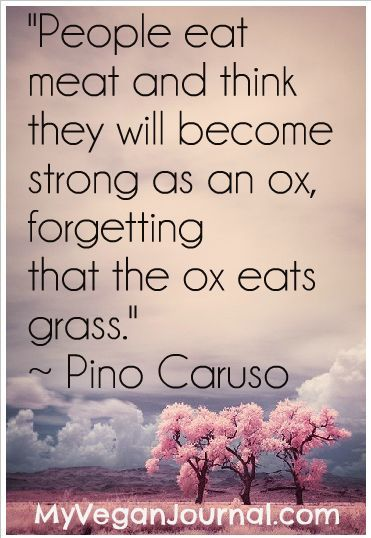 People eat meat and they think they will become strong as an ox, forgetting that the ox eats grass. #food #food quote #inspirationalquote zaikaofkensington...