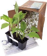 best mail order plant web sites