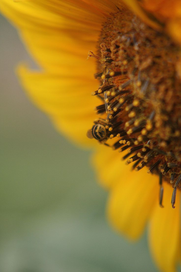 The Hairs on a Bee's Bum!