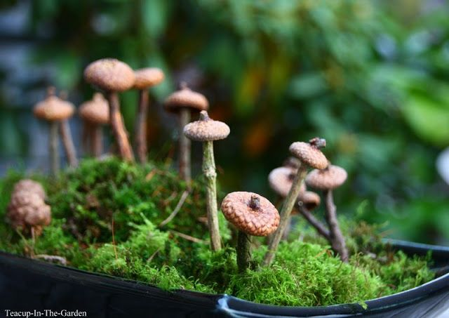 Deko Pilze Selber Machen , 51 Best Herbst Images On Pinterest