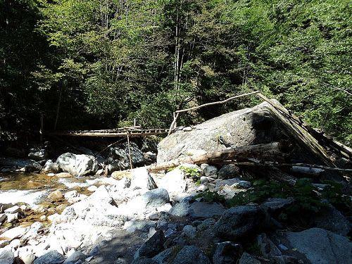 Reserve Tişiţa-  The bridge