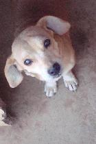 PZ - Adopção de Cadela - Cão Rafeiro - Alice - acolhido(a) por SOS dos Animais de Moura - 13 anos