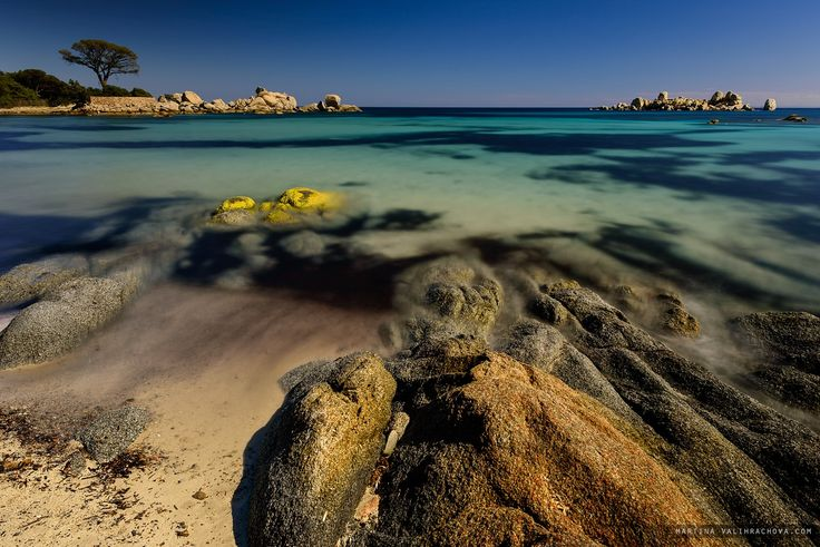 On the beach - Famous pine tree on Palombaggia beach with azure clear water and sandy beach on the south part of Corsica, France