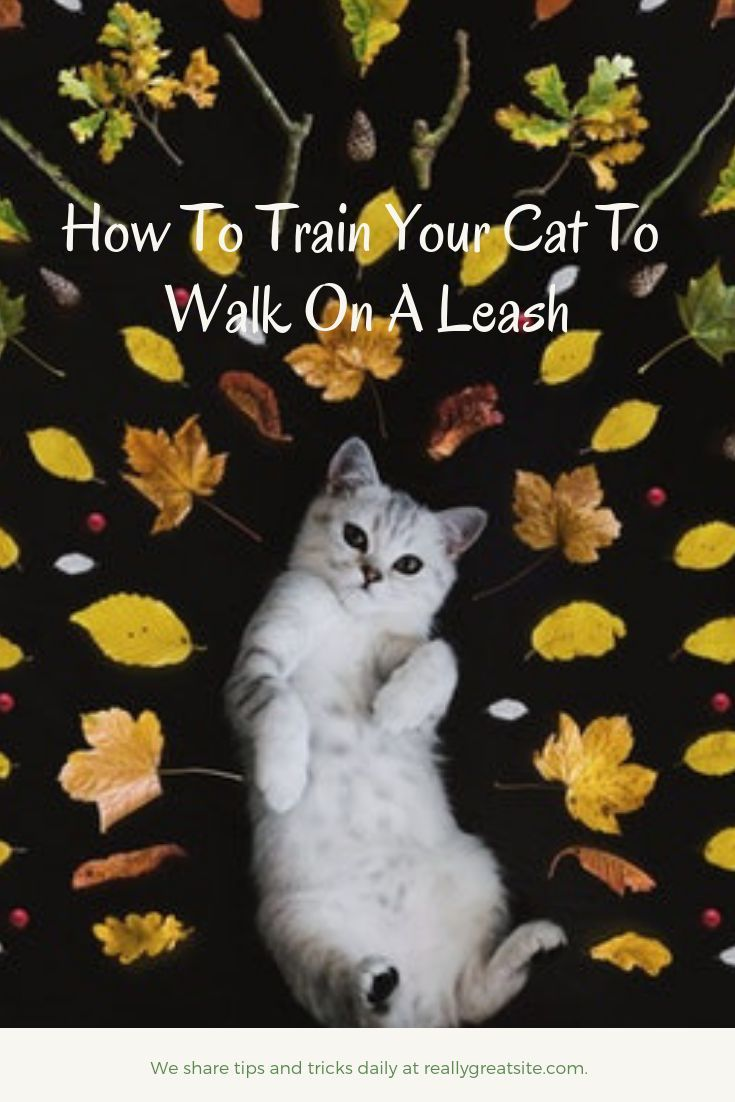 Training Your Cat To Walk On A Leash When You Do Go Out You Need To Avoid Places With Too Much Noise Or Indeed Traffic If You Go Cats Pet Mom Cat Noises