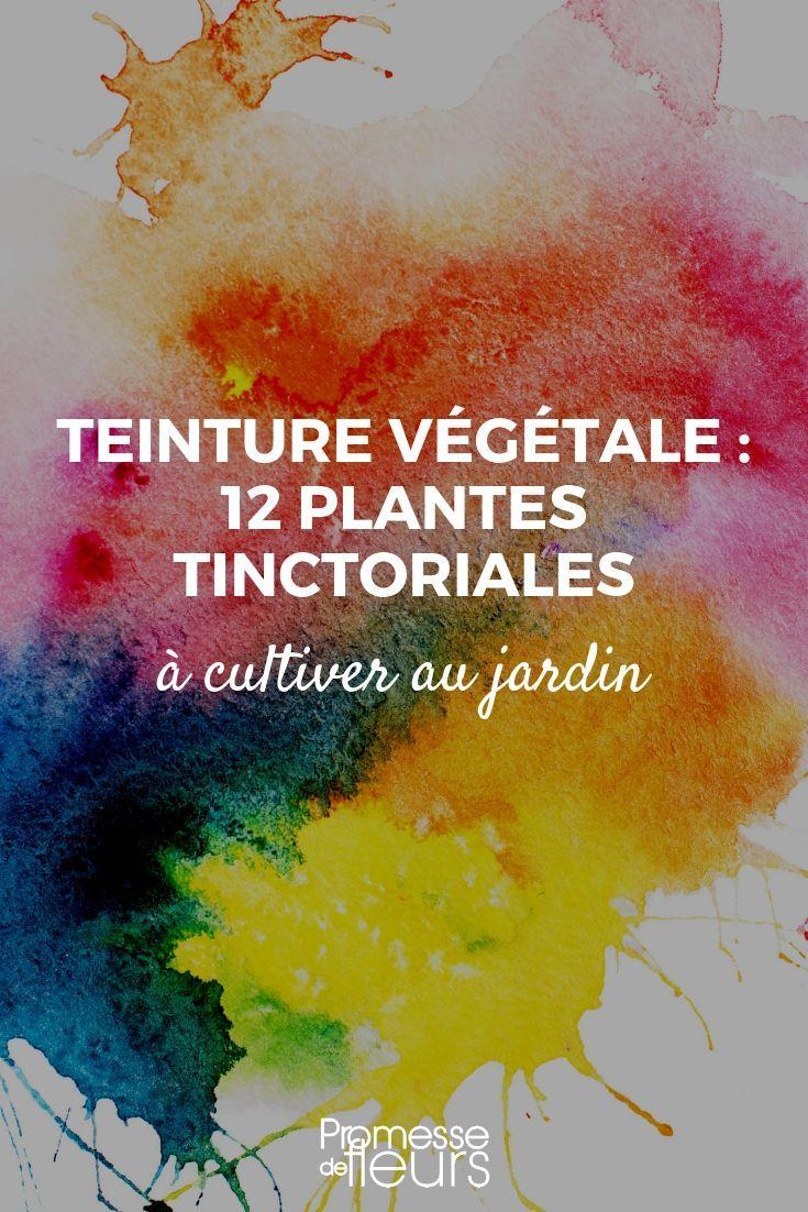 12 plantes tinctoriales pour teintures végétales