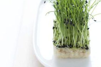 Hydrogen Peroxide to prevent ecoli in home sprouts