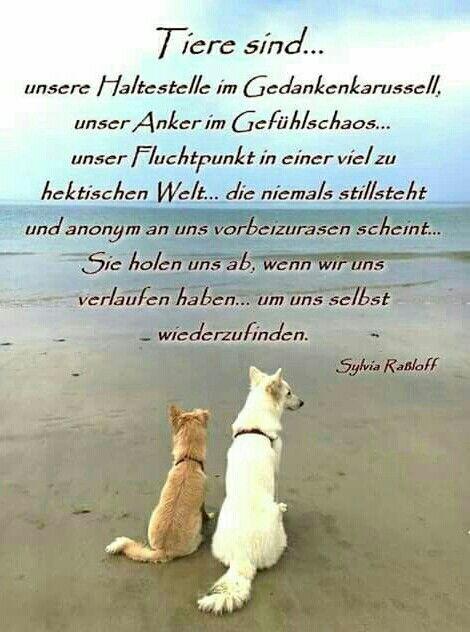 Tiere sind die besseren Menschen – Cornelia Franz