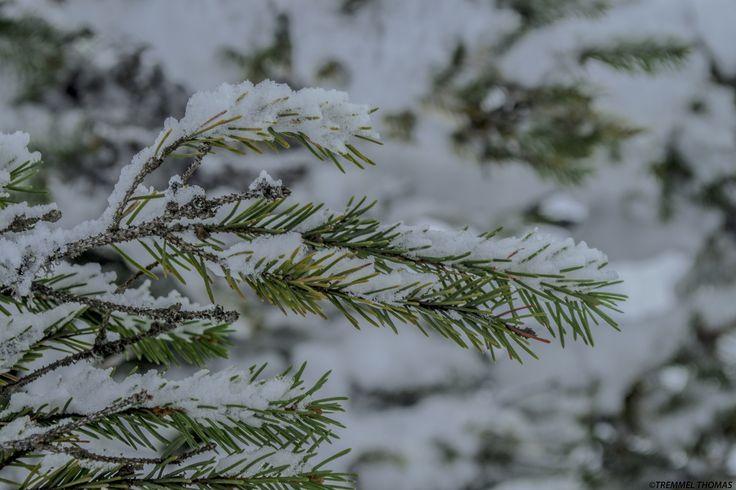 a globule tree with snow by tremmel thomas on 500px