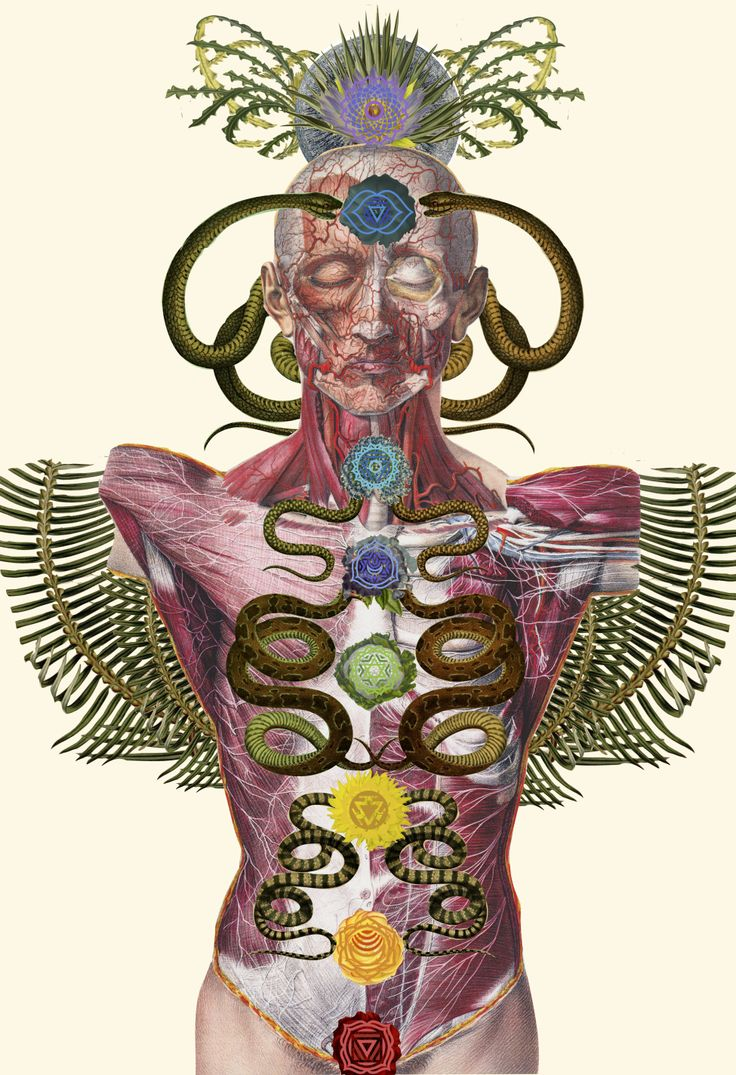 chakras anatomical collage art by bedelgeuse