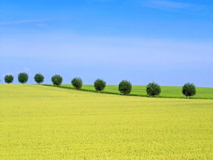 Skane Trees