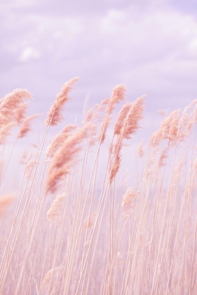 Dreamy Pastel Beach Grass - OGQ Backgrounds HD