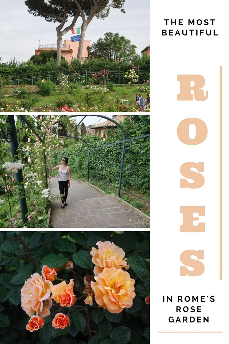 Rome's rose garden, Roseto Comunale, has around 1200 varieties of roses. It's only open a few months of the year, so it's a rare, off the beaten path, must see garden in Italy!
