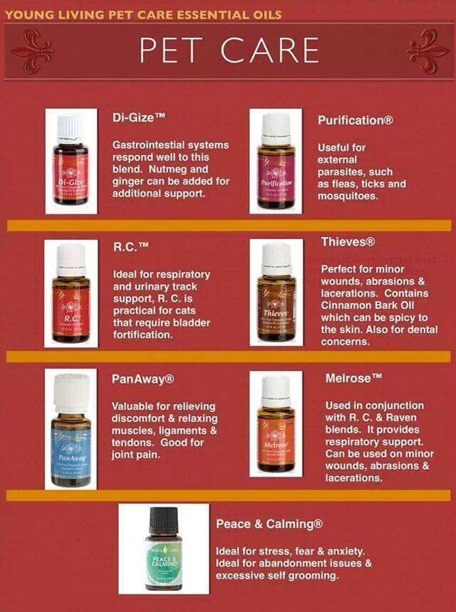 Essential Oils for Pet Care