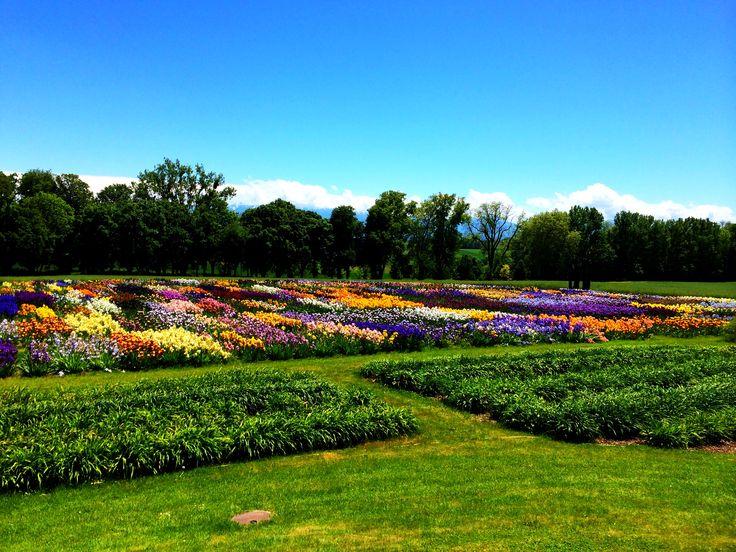 Les magnifiques couleurs des champs d'iris de nos Jardins
