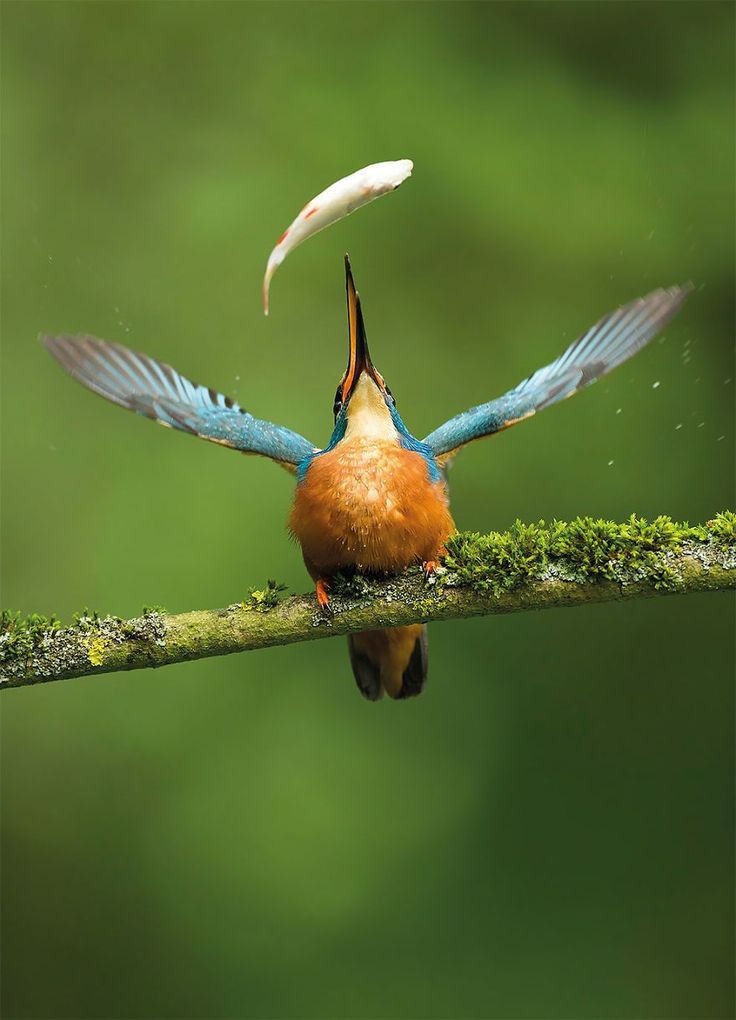 Catch Of The Day By Vince Burton, UK. Winner Of The Nature Photographers Ltd People's Choice Award Category