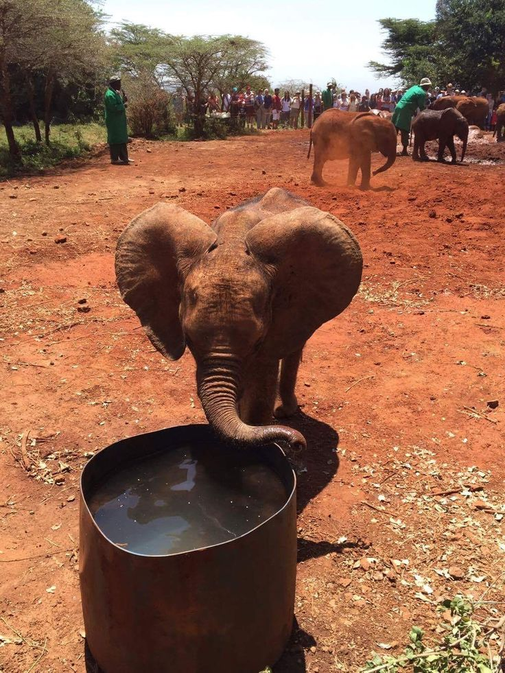 This little one is so cute - Africa ☀️