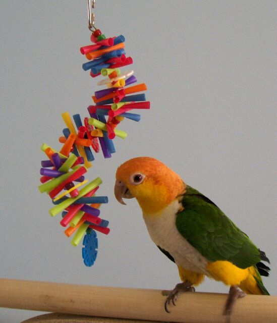 Small Toy Parrots : Best bird toys for cockatoos and macaw parrots images