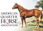 Como realizar el Primer Examen Fisico de su Potrillo Blog AQHA caballos cuarto de milla Examen Fisico de Potrillos Primer Examen Equino StallionMexSearch