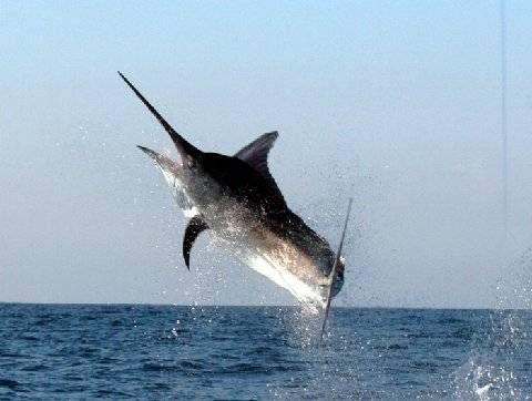 What makes Puerto Vallarta fishing trip memorable and enjoyable
