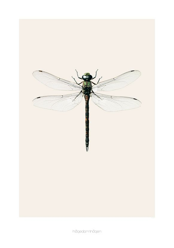 Poster dragonfly B7 - Hagedornhagen - BijzonderMOOI* Dutch design online