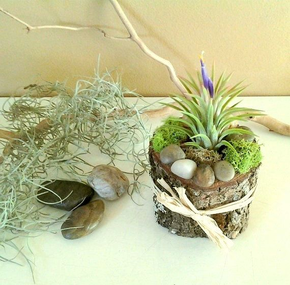 best 25 rustic terrariums ideas on clay pot projects for garden indoor plants
